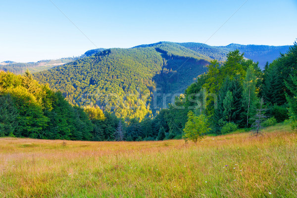 Green mountain covered with forest Stock photo © vapi