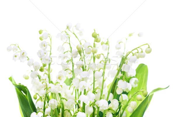 Stockfoto: Lelies · vallei · witte · bloemen · geïsoleerd · witte · bloem