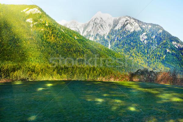 Verde campo montanhas coberto neve árvore Foto stock © vapi