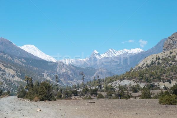 Tibetan road with firs in Himalayan mountain Stock photo © vapi
