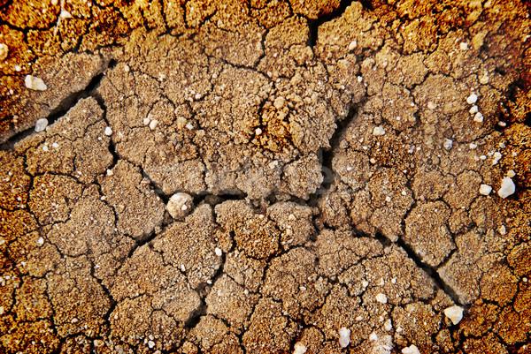 Dry soil Stock photo © vapi