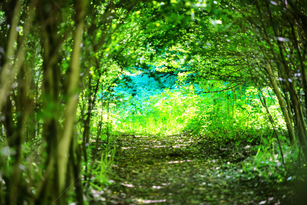 Stock photo: Magical forest with path to the light