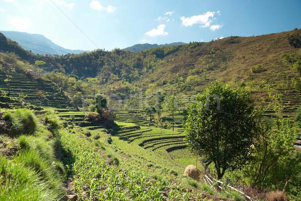 Rijstveld groene rijst velden landschap Nepal Stockfoto © vapi