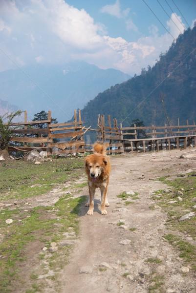 The dog and Tibetan village with mountains. Stock photo © vapi