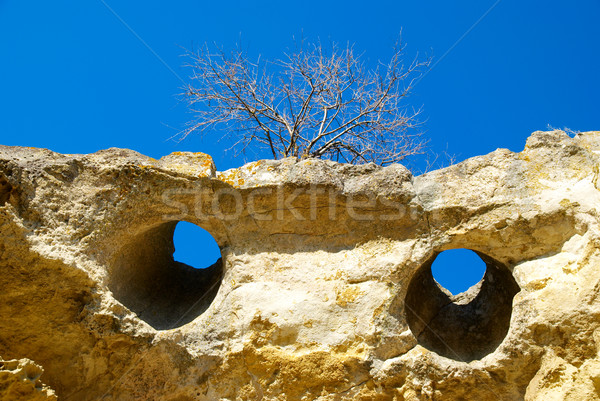 A tree on the sandstone rocks. Stock photo © vapi