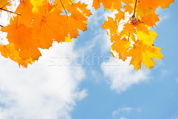 Najaar Rood bladeren esdoorn blauwe hemel boom Stockfoto © vapi