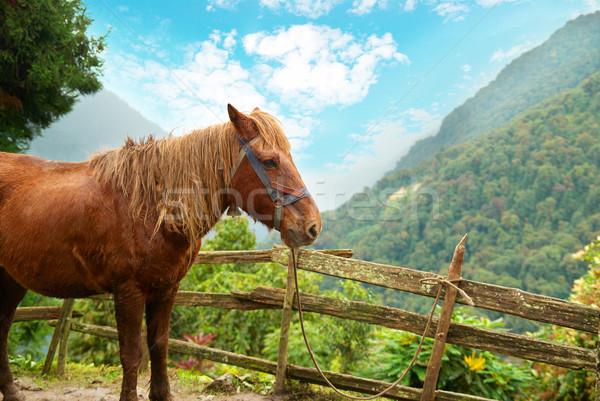 Red horse in the farm Stock photo © vapi
