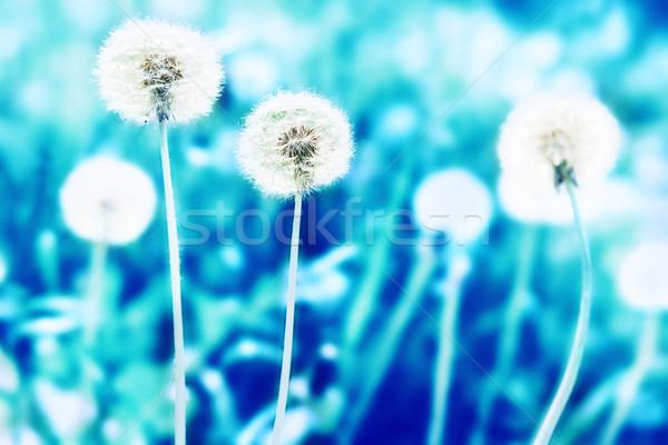Biały trawnik niebieski streszczenie krajobraz Zdjęcia stock © vapi