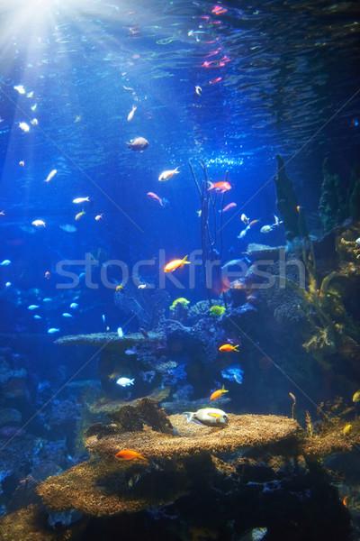 Tropical fish near coral reef Stock photo © vapi