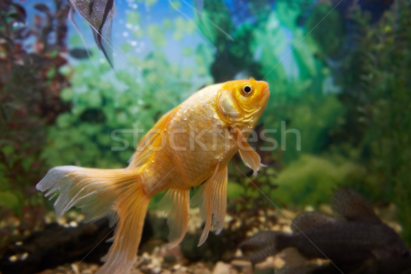 Színes halfajok akvárium trópusi úszik növények Stock fotó © vapi