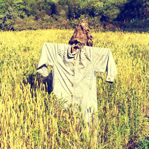 Korkuluk alan tok buğday instagram renkler Stok fotoğraf © vapi