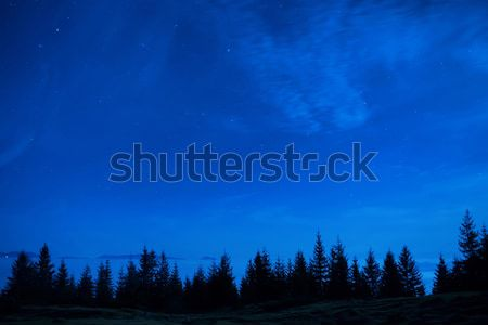 Stock photo: Forest of pine trees under blue dark night sky