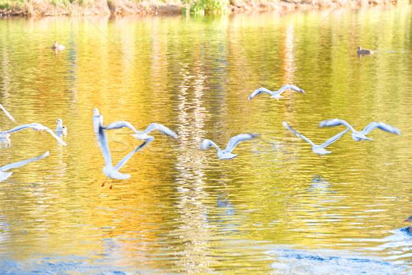 Madarak sereg repülés fölött víz égbolt Stock fotó © vapi