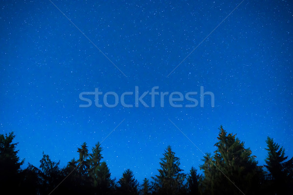 Dark blue night pine trees over sky Stock photo © vapi