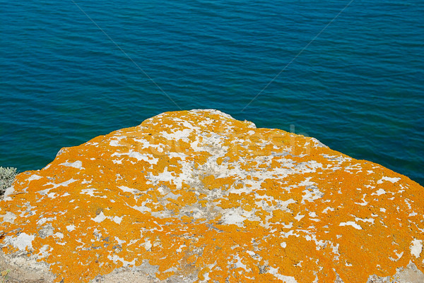 Texture of lichen on the stone and the sea. Stock photo © vapi