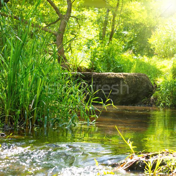 Stream tropische bos milieu zonnige landschap Stockfoto © vapi