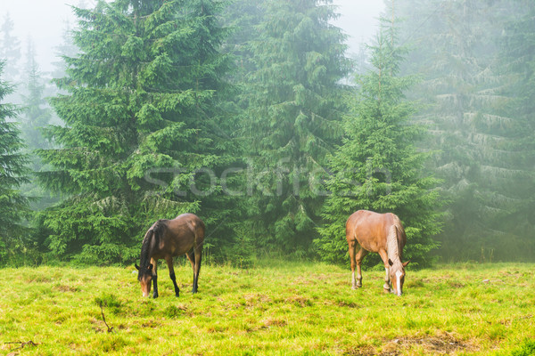 Kettő vad fut lovak ködös erdő Stock fotó © vapi