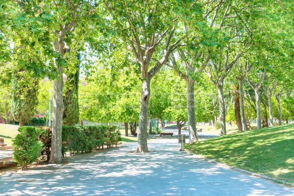 Verde ensolarado parque árvores Barcelona céu Foto stock © vapi