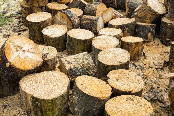 Wooden logs of oak tree Stock photo © vapi