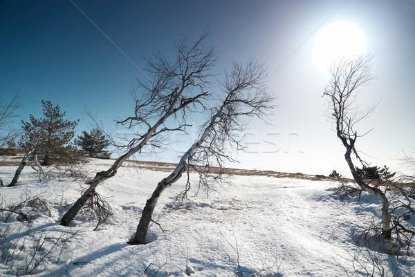Fák hó napsütés csillag fa fű Stock fotó © vapi