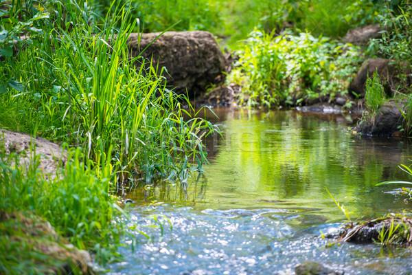 Stock fotó: Folyam · trópusi · erdő · környezet · napos · tájkép