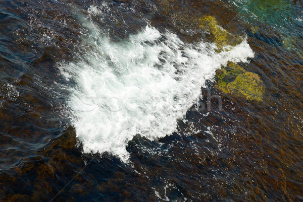 A big wave and the brown algae. Stock photo © vapi