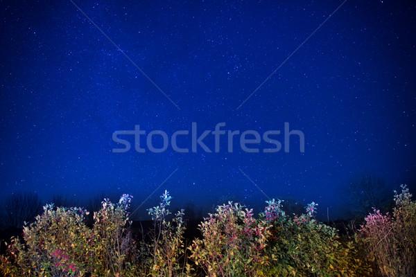Autumn forest under blue dark night sky Stock photo © vapi