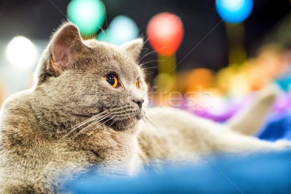Adorabile gatto grigio arancione occhi seduta guardando Foto d'archivio © vapi