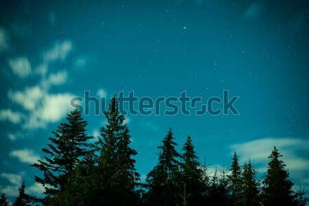 Big pine trees under blue night sky Stock photo © vapi