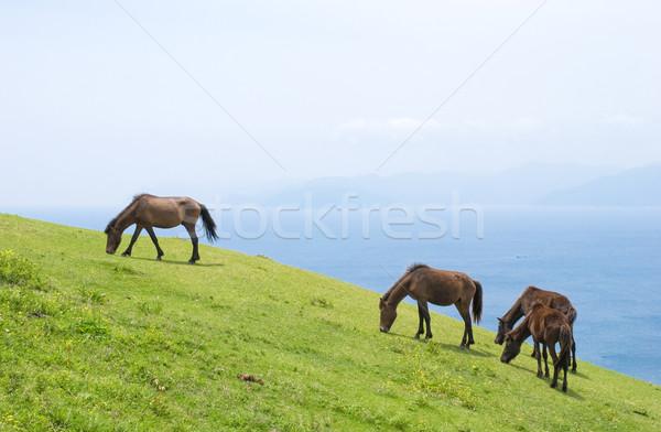 Wild horse Stock photo © varts