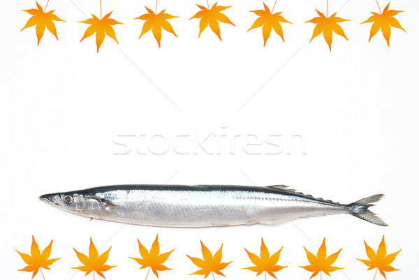 Saury Stock photo © varts