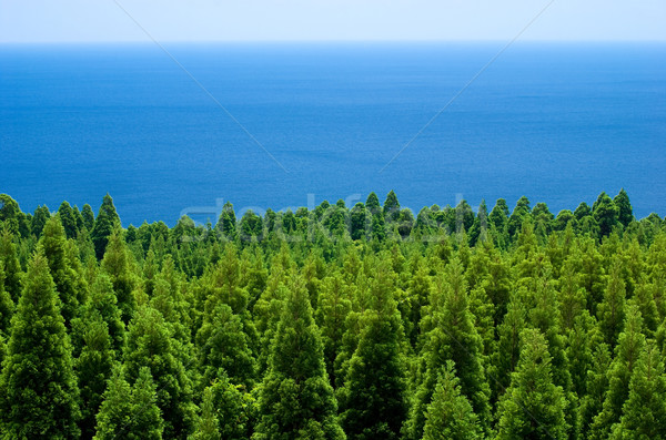 Forest and sea Stock photo © varts