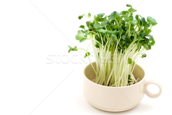 Stock photo: White radish sprouts