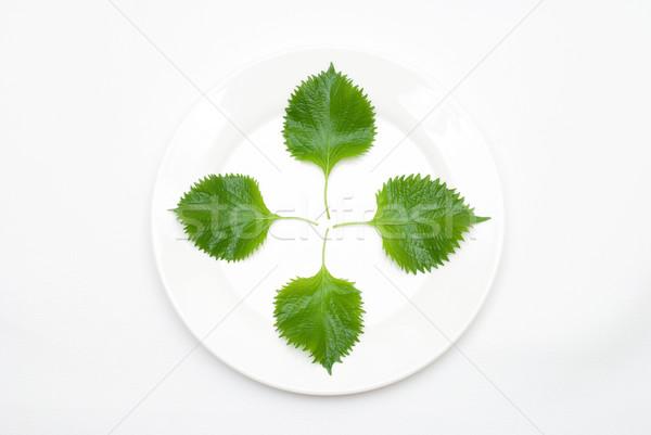 Pozostawia tablicy befsztyk roślin zielone kolor Zdjęcia stock © varts