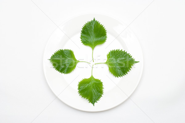 листьев пластина бифштекс завода зеленый цвета Сток-фото © varts