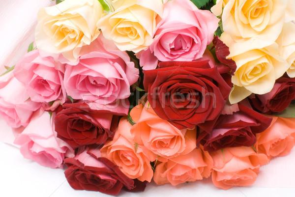 Colorful rose Stock photo © varts