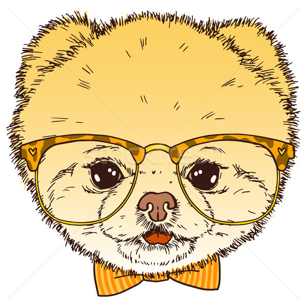 Pomeranian dog head with glasses and bow-tie. Vector isolated hipster puppy  illustration. Stock photo © vasilixa