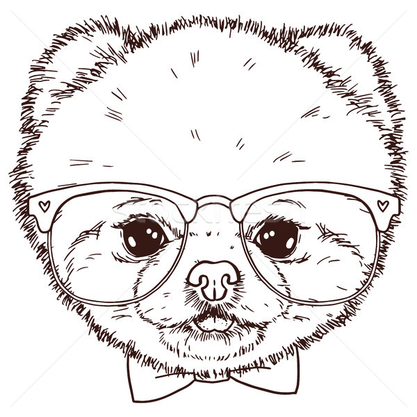 Black and white isolated pomeranian dog head with bow-tie and glasses. Vector hand drawn puppy face. Stock photo © vasilixa