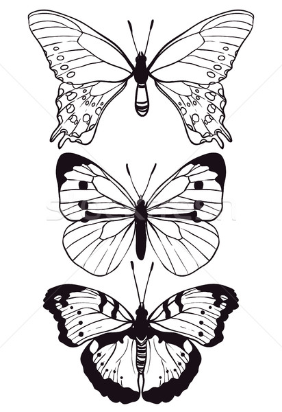 Butterflies set hand drawn Stock photo © vasilixa