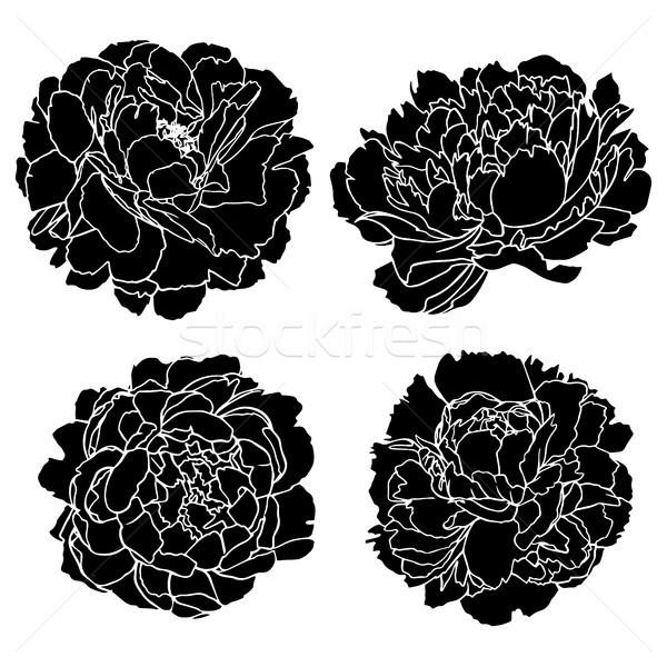 набор вектора рисованной цветы изолированный Сток-фото © vasilixa
