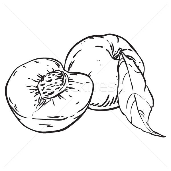Pêssegos esboço ilustração comida projeto Foto stock © vasilixa