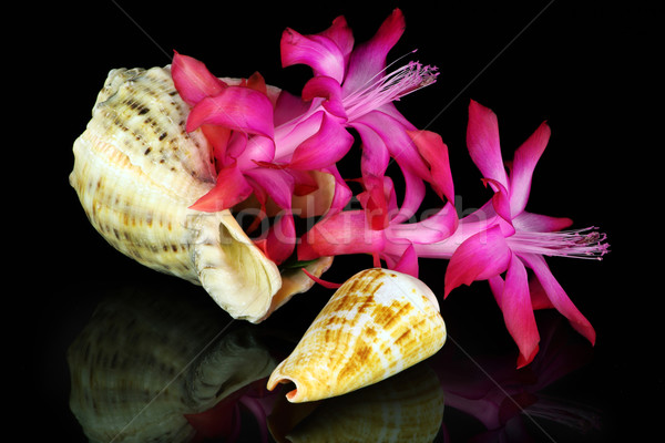 Marine flower on black  Stock photo © vavlt