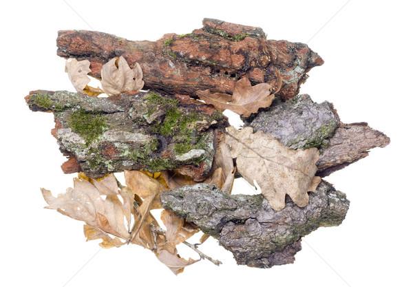 Oak bark  Stock photo © vavlt
