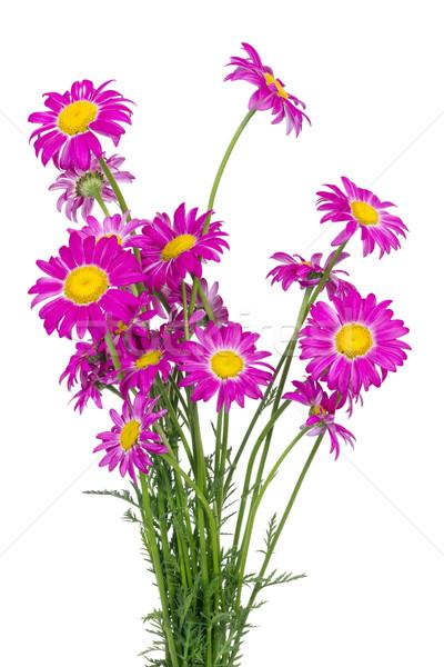 クール 永遠 孤立した 植物 テクスチャ 愛 ストックフォト © vavlt