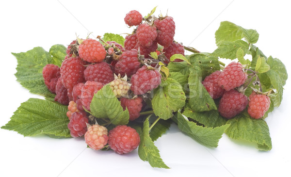 Ripe and unripe raspberry on branches Stock photo © vavlt