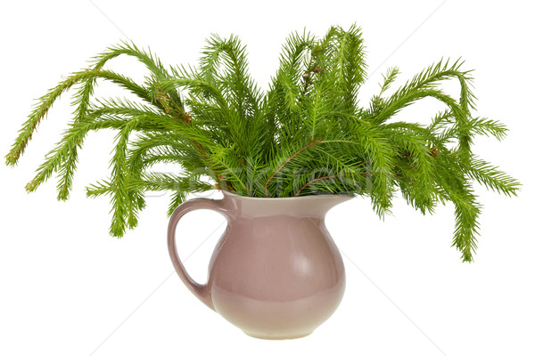 not decorated Christmas fir Stock photo © vavlt