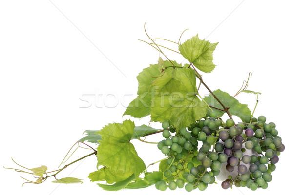 minimalistic  bouquet- Jgreen grapes  branches Stock photo © vavlt