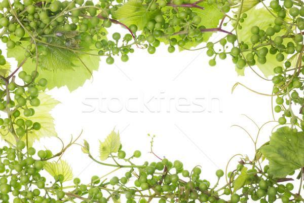 unripe sour green grapes frame Stock photo © vavlt
