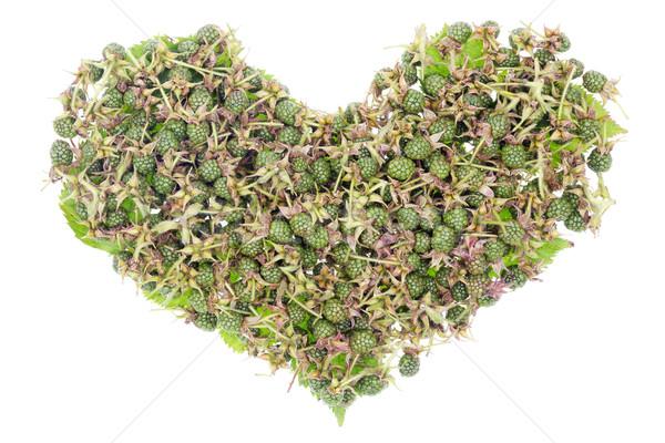 Green unripe blackberries heart concept Stock photo © vavlt