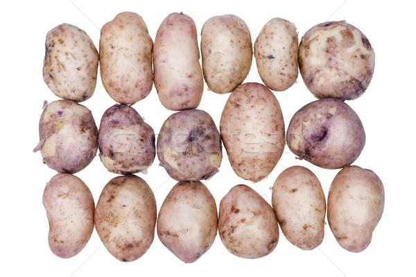 картофель молодые свежие линия подготовленный Сток-фото © vavlt
